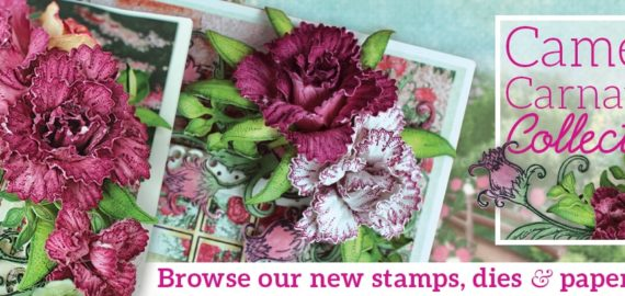 camelia-carnation_home-page-banner